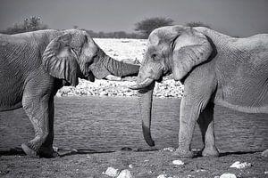 Olifanten knuffel van Fotografie Egmond