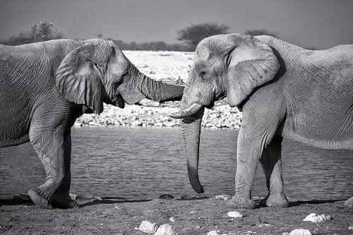 Olifanten knuffel van
