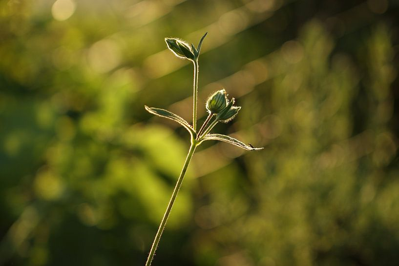 garden flower van Erich Werner