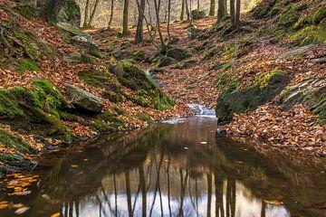rust in het bos van de ninglinspo van Francois Debets