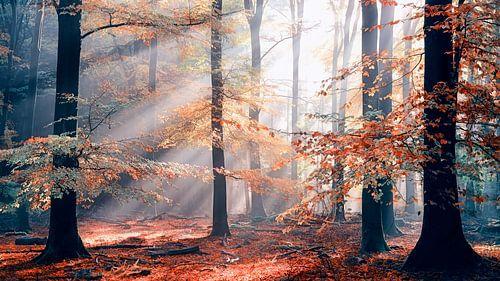 Sinfonia Della Foresta 2