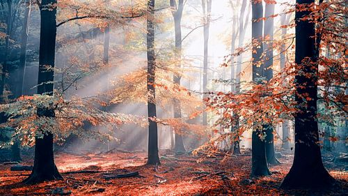 Sinfonia Della Foresta - Herbstwald von Lars van de Goor