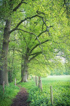 groene omgeving van Ronenvief