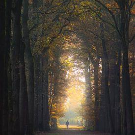 Magische herfstwandeling van Pieter Heymeijer