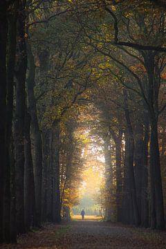 Magische herfstwandeling von Pieter Heymeijer