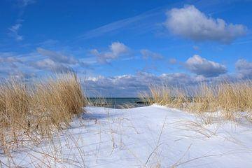 Dünen im Schnee van Ostsee Bilder