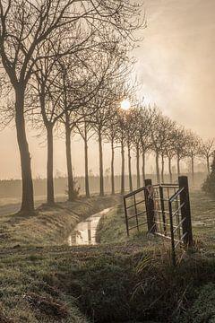 Mooie bomenlaan von Moetwil en van Dijk - Fotografie