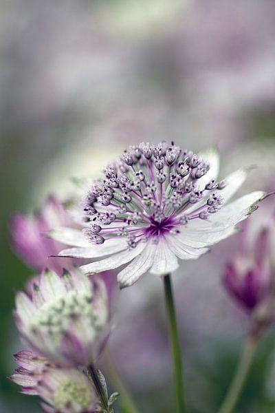tenderness van Luchiena Heine
