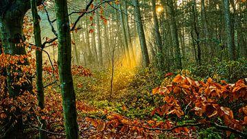 Bos in de herfst van nol ploegmakers