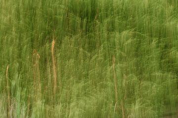 Abstracte coniferen van Marjolijn Maljaars