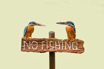 IJsvogels met vis op 'no fishing' bordje van Frans Lemmens