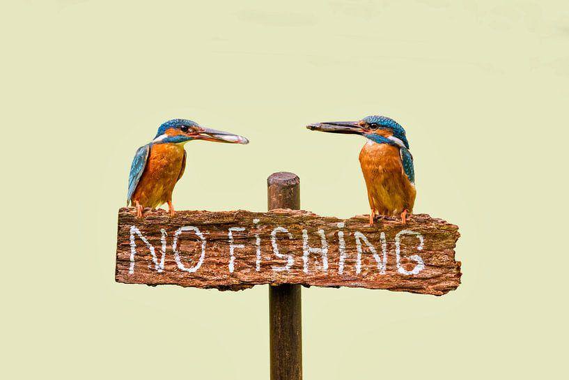 """Des martins-pêcheurs avec du poisson sur un panneau en disant """"no fishing"""" sur Frans Lemmens"""