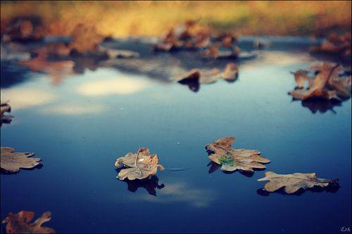 Leaves. van