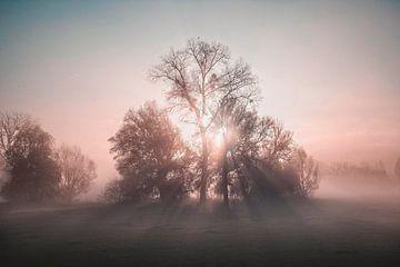 Nebliger Sonnenaufgang von Rob Boon