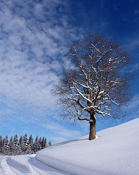 Winter im Allgäu sur Renate Knapp