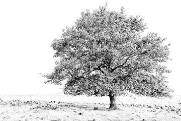boom van