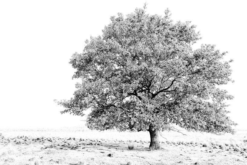 boom van Hans Bronk