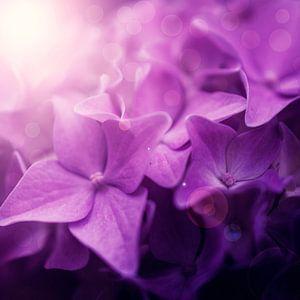 Roze bloemen dromerig