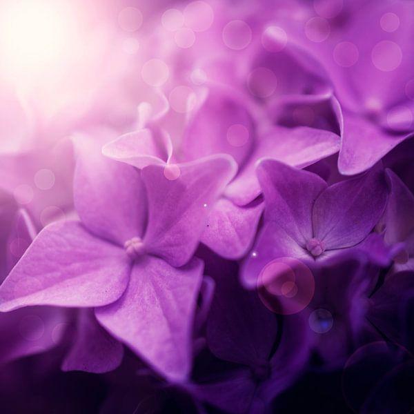 Roze bloemen dromerig van Danny van den Berg