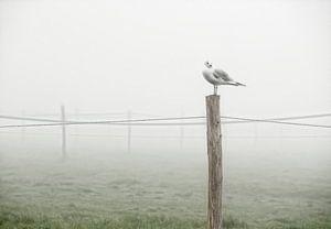 Eenzame meeuw in landschap