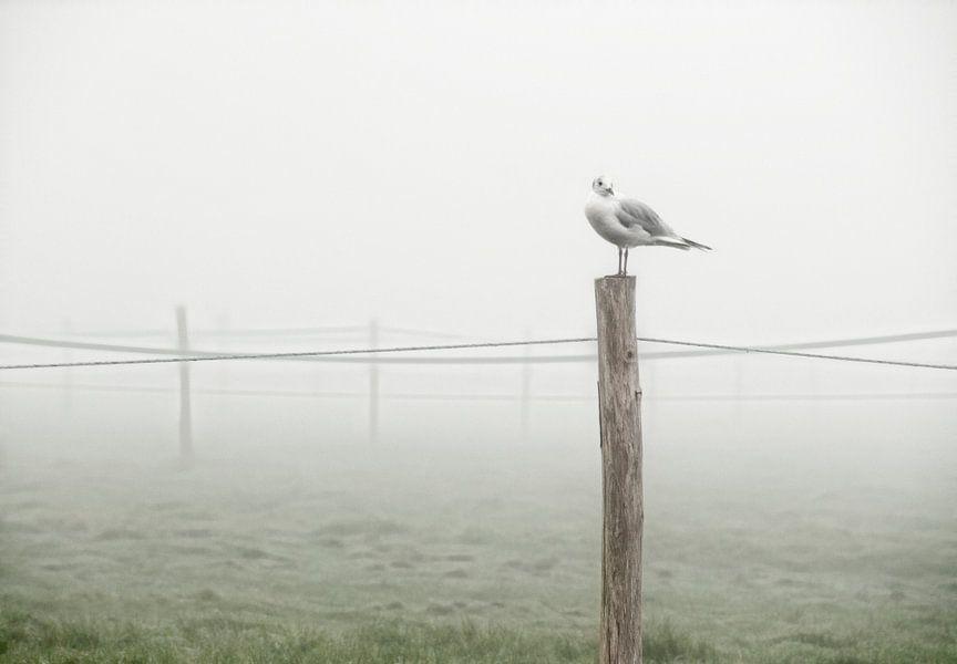 Eenzame meeuw in landschap van Marcel van Balken