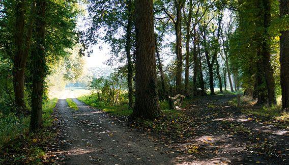 Tweesprong in het bos
