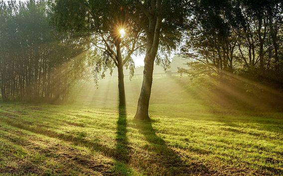 Zonnestralen door de bomen van Dirk van Egmond