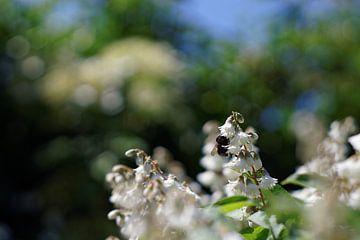 Bee in the Garden - 2016 von Timmy Bouwmann