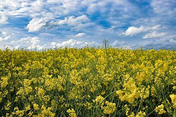 Felder aus Gold von Ingrid de Vos - Boom