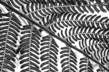 Varenblad symmetrie zwart wit van Tessa Louwerens