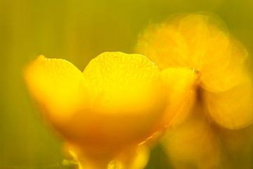 Gelb 2 von Peter Heins