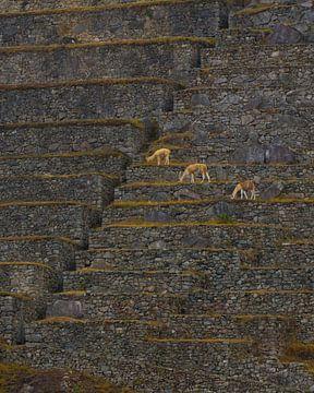 De lijnen van Machu Picchu