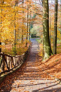 Herfst in stadspark Sonsbeek Arnhem van Armin Palavra