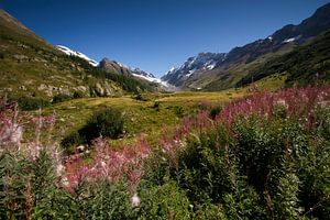 Zomer in Lotschental Zwitserland