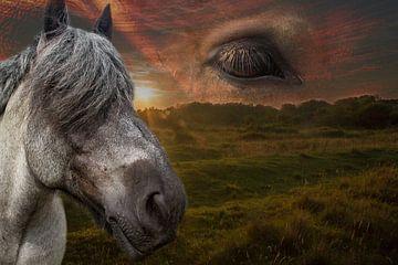 Heavenly horses van Abra van Vossen
