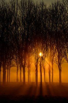 Zonnestralen von Yvonne van der Meij