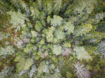 La forêt de l'œil de l'aigle vue d'en haut