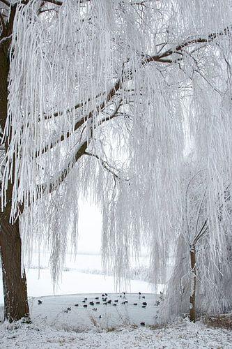 winterlandschap in de polder van