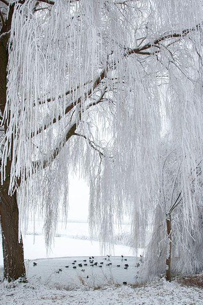 winterlandschap in de polder van Rick Keus