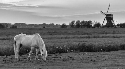 Grazend paard bij windmolen de Bachtenaar (zwart-wit)