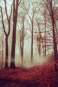 Wald im Spätherbst von Dirk Wüstenhagen