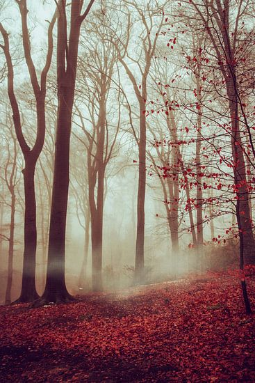 Late Fall Forest van Dirk Wüstenhagen