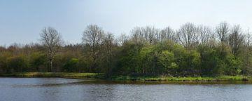 Een bosrand in het vroege voorjaar. van Wim vd Neut
