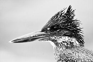 Afrikaanse reuzenijsvogel von Lotje Hondius