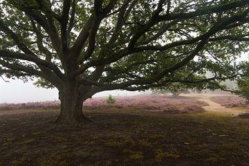 Under the Tree van Nuance Beeld