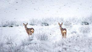 Reeën in sneeuwlandschap van
