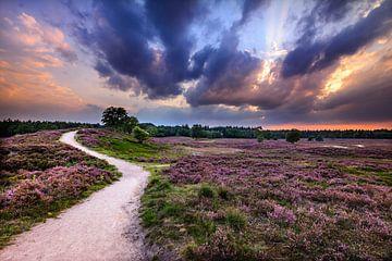 Zonsondergang op de Heide van