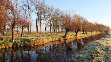 Winterlicht von Yvonne Blokland