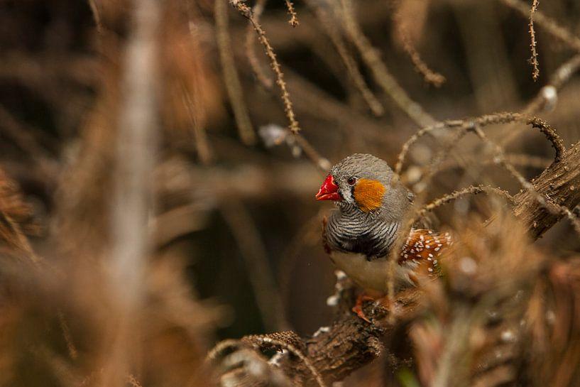 Vogeltje in de vegetatie II van Geke Woudstra