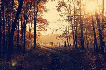Herfst in het bos von Laurance Didden